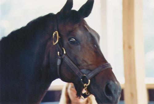 Forego en el Kentucky Horse Park, Agosto de 1991, foto de Shannon