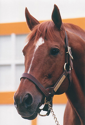 Secretariat, photo from Thoroughbredmemories.com